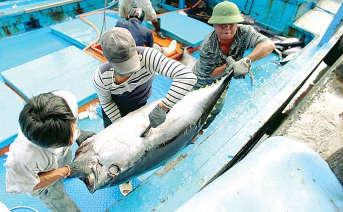 Hưng phấn với mùa cá ngừ đại dương - Ảnh 5.
