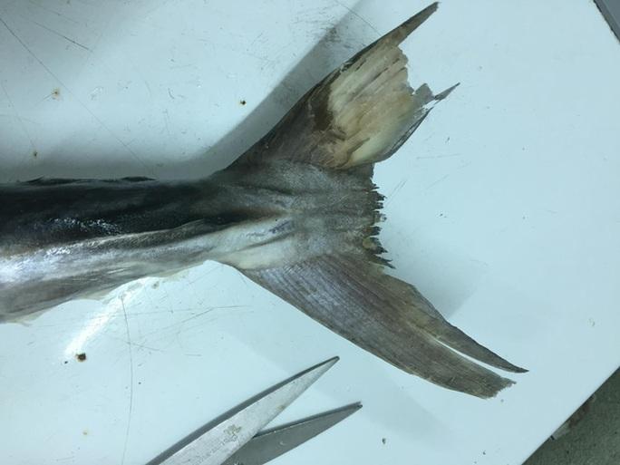 Tiết lộ sốc của một chủ hàng chuyên bán cá thu - Ảnh 5.