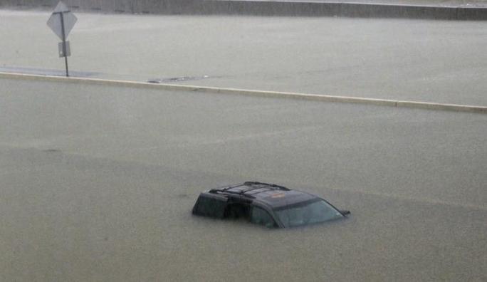 Chú chó biểu tượng cho sức mạnh Texas trong bão Harvey - Ảnh 5.