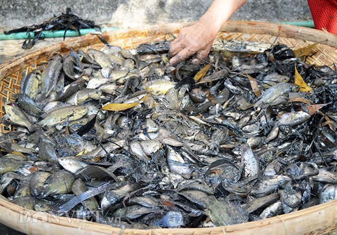 Cá đồng có hơn chục loại trong đó phổ biến các loại có giá trị cao như: cá lóc, trê, rô, bổi, thác lác, chạch,…