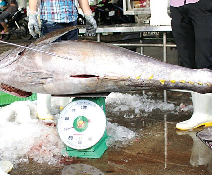Hưng phấn với mùa cá ngừ đại dương - Ảnh 6.