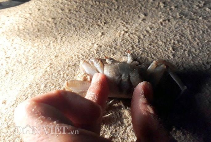 Kỳ thú lao xuống biển đêm săn còng - Ảnh 2.