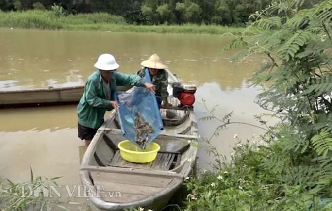 Cuối mùa săn cá bống ở đáy sông Trà Khúc - Ảnh 2.