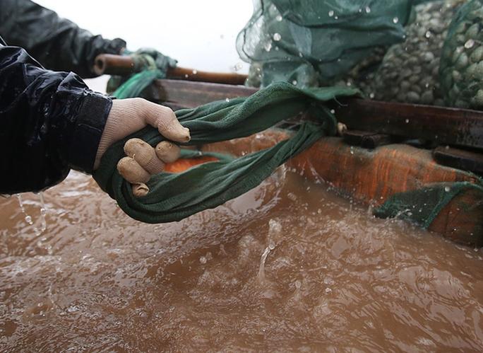 Cận cảnh bắt hàng trăm tấn ngao ở biển Tiền Hải - Ảnh 7.