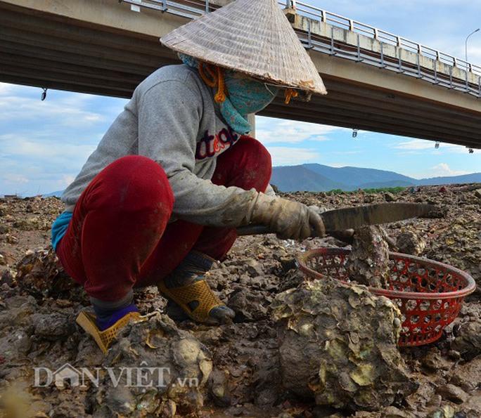 Săn hàu dưới chân cầu Nhơn Hội, TP Quy Nhơn - Ảnh 3.