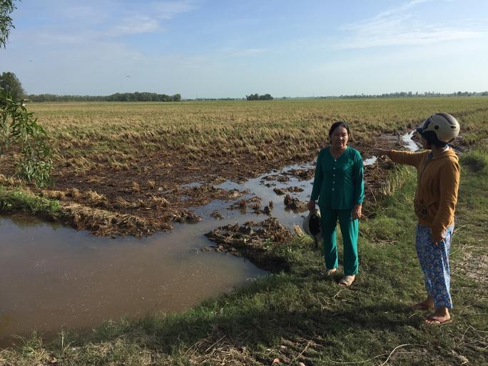 Nhiều diện tích sản xuất ở ĐBSCL đang bị ảnh hưởng do mặn xâm nhập.Ảnh: Duy Nhân