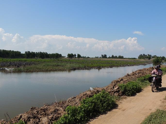 Hiện trường 26 ha rừng đước bảo tồn sau khi bị triệt hạ
