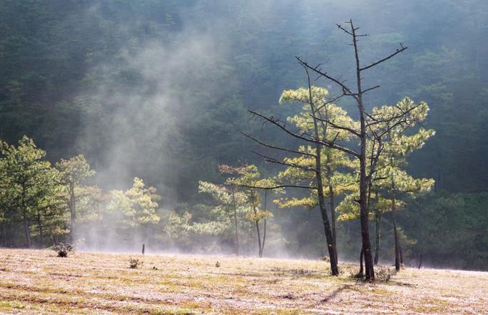 Ma mị cỏ hồng trong sương sớm Đà Lạt - Ảnh 1.