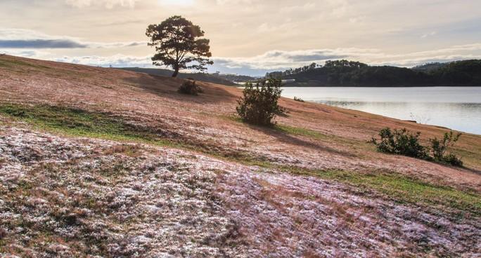 Ma mị cỏ hồng trong sương sớm Đà Lạt - Ảnh 6.