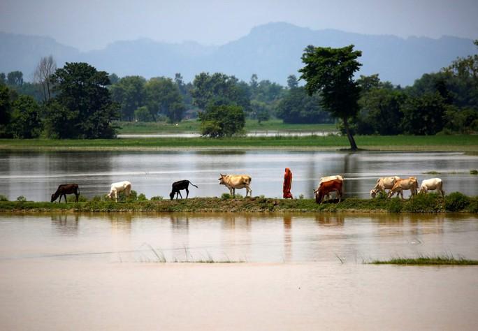 Lũ lụt tàn phá Nam Á, hơn 1.200 người thiệt mạng - Ảnh 9.