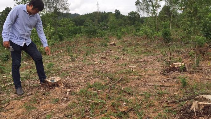 Tìm ra thủ phạm chặt rừng thông đặc dụng tại Huế - Ảnh 1.