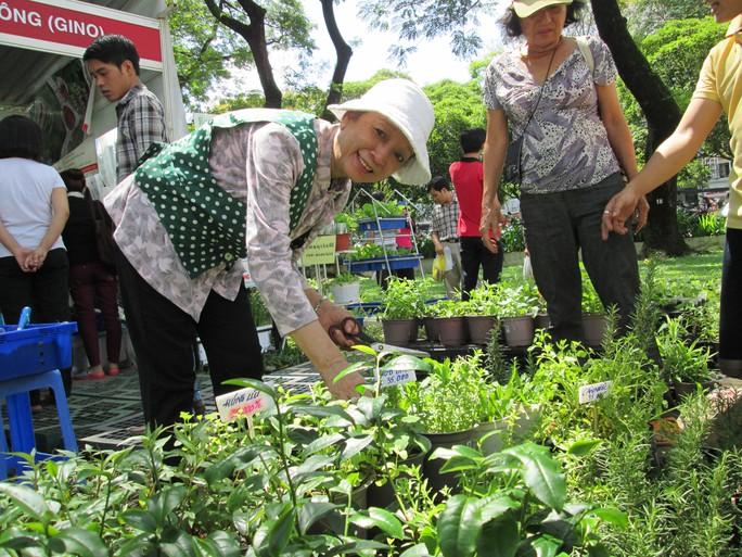 TS Nguyễn Thị Đào bên những chậu rau mini hữu cơ