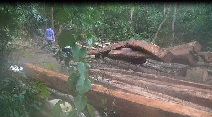 Cận cảnh công trường khai thác gỗ lậu khủng ở Đắk Lắk - Ảnh 8.