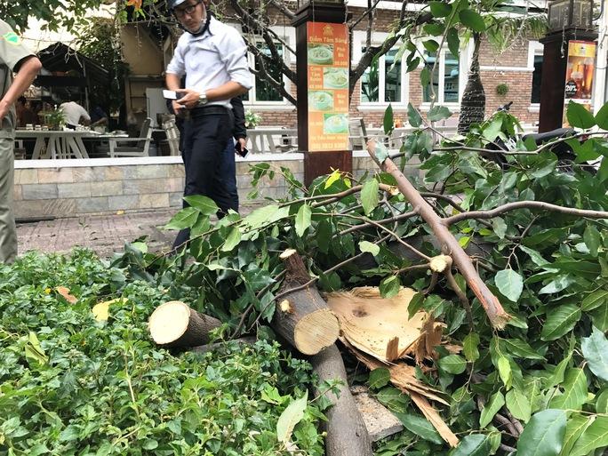 Nhánh cây rơi đè nhân viên bảo vệ trọng thương - Ảnh 2.