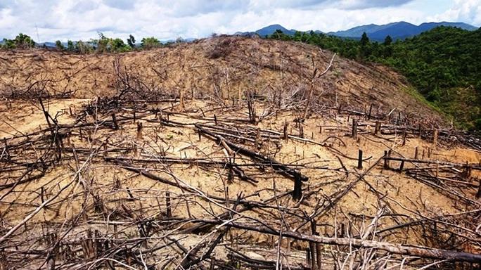 Chủ tịch tỉnh yêu cầu tìm cho ra kẻ chủ mưu phá rừng - Ảnh 1.
