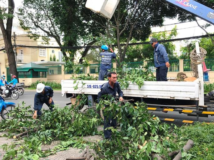 Nhánh cây rơi đè nhân viên bảo vệ trọng thương - Ảnh 4.