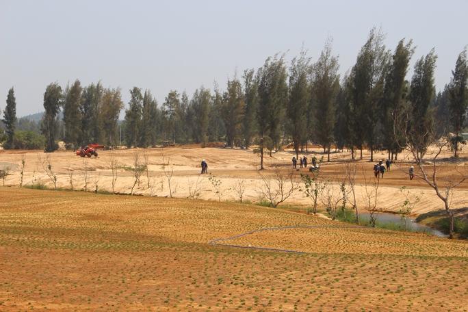Nhiều diện tích rừng phòng hộ đã bị phá sạch