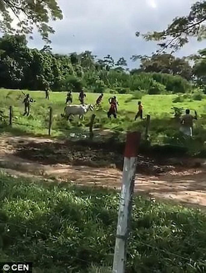 Venezuela: Người dân ném chết gia súc để lấy cái ăn - Ảnh 2.