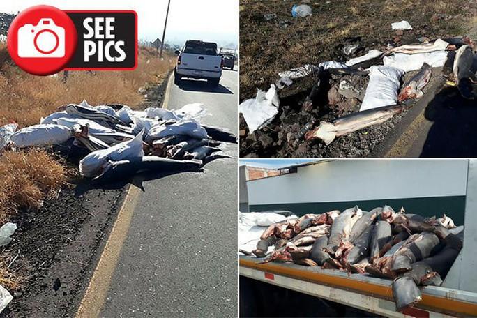 Mexico: Phát hiện 300 xác cá mập chất đống dọc đường - Ảnh 1.