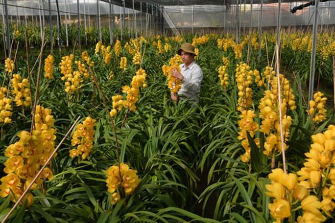 Nhà vườn thất thu do hoa Tết nở sớm - Ảnh 1.