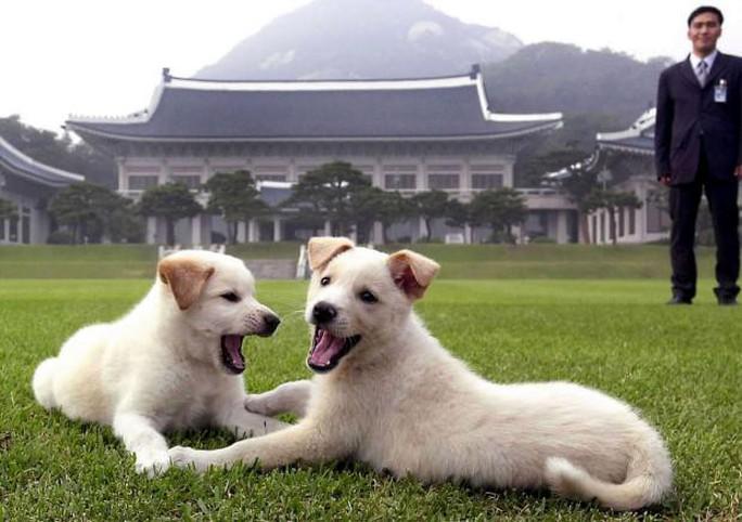 Ông Kim Jong-un tặng chó săn cho tổng thống Hàn Quốc - Ảnh 1.