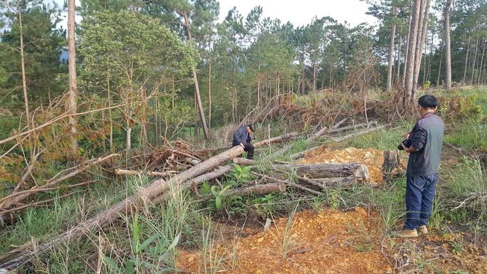 Lâm Đồng: Đình chỉ công tác 1 phó chủ tịch xã để mất rừng gần trụ sở - Ảnh 2.