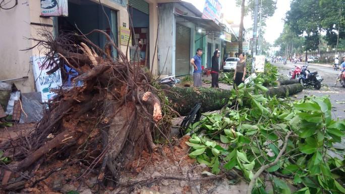 Lốc xoáy tại Đồng Nai khiến nhà tốc mái, cây xanh bật gốc - Ảnh 1.