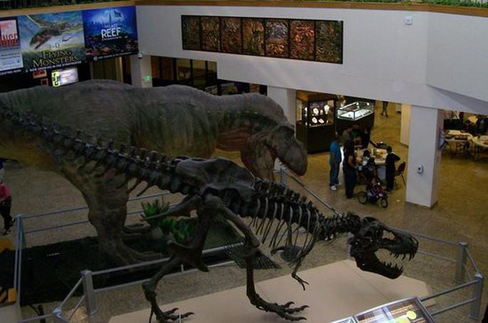 Tiết lộ gây sốc về khủng long bạo chúa - Ảnh 5.