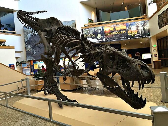 Tiết lộ gây sốc về khủng long bạo chúa - Ảnh 4.