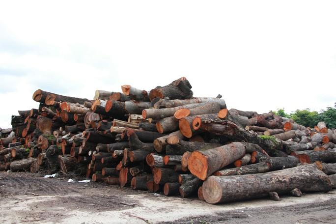 TP HCM lãng phí cả ngàn mét khối gỗ công - Ảnh 2.
