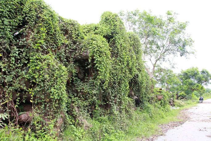 Đường đi của các loại cây xanh bị đốn hạ ở TP HCM - Ảnh 10.