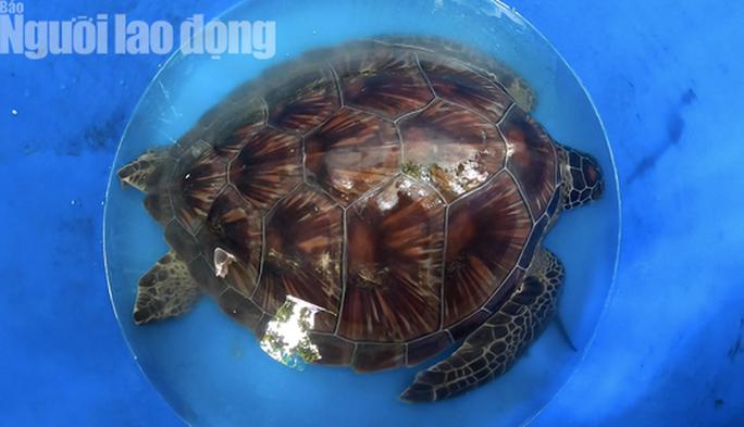 TP HCM: Phát hiện rùa biển quý hiếm, đem giao nộp cho cơ quan chức năng - Ảnh 4.