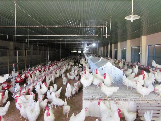 Cận cảnh quá trình điều chế vắc-xin phòng H5N1 made in Việt Nam - Ảnh 1.
