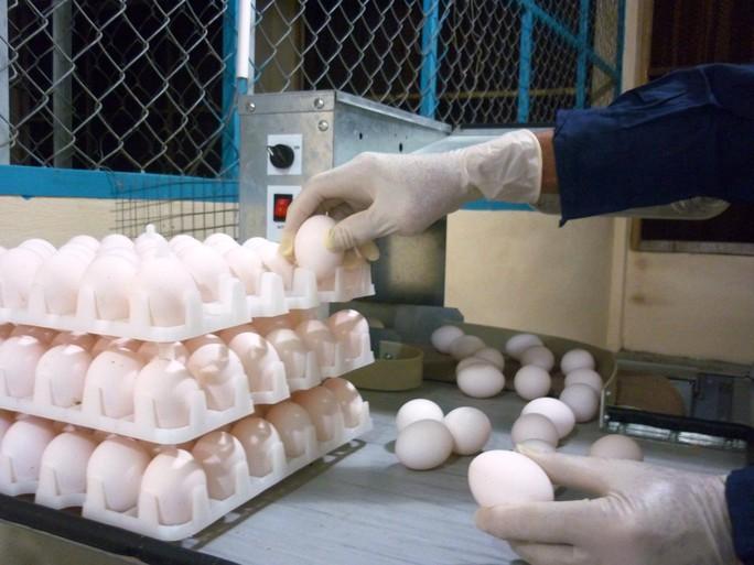 Cận cảnh quá trình điều chế vắc-xin phòng H5N1 made in Việt Nam - Ảnh 3.