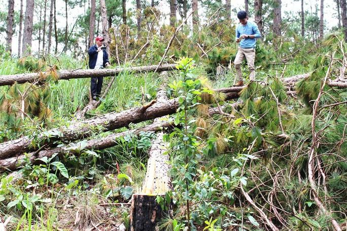 Sau phản ánh của Báo Người Lao Động: Chủ tịch tỉnh Lâm Đồng chỉ đạo ngăn chặn phá rừng - Ảnh 1.