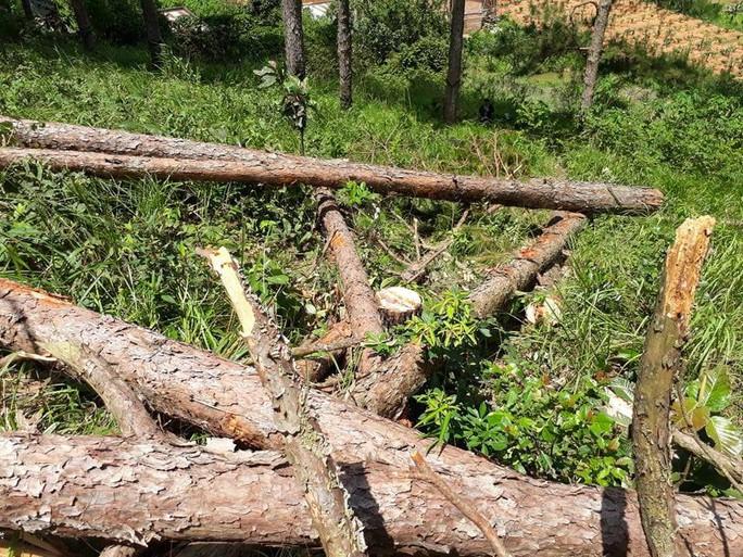Phó Thủ tướng chỉ đạo điều tra làm rõ vụ phá rừng ở Lâm Đồng - Ảnh 8.