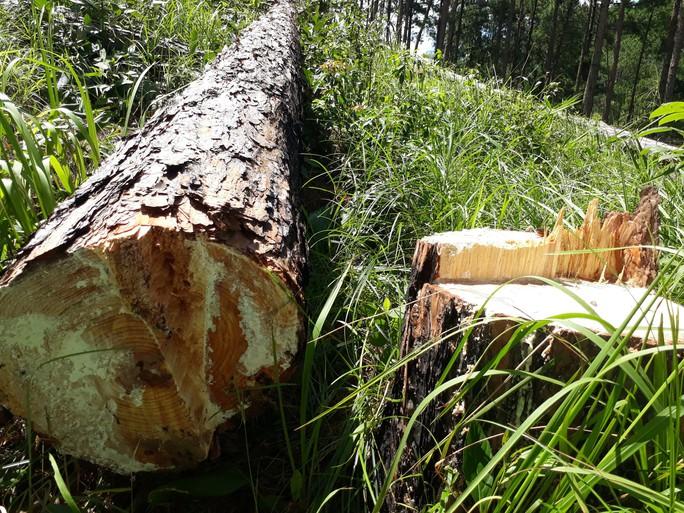 Phó Thủ tướng chỉ đạo điều tra làm rõ vụ phá rừng ở Lâm Đồng - Ảnh 9.