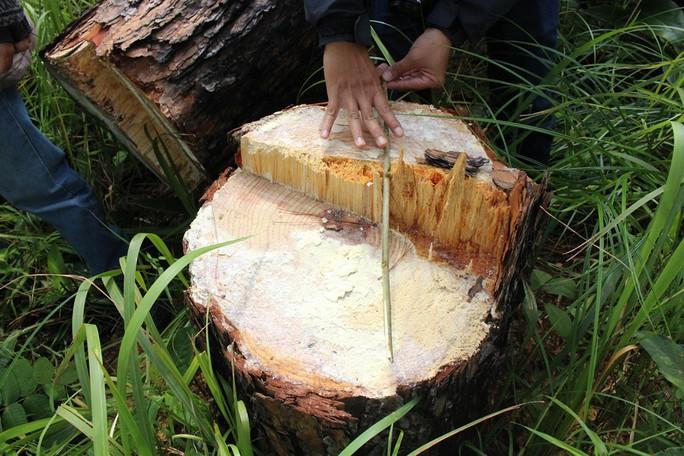 Phó Thủ tướng chỉ đạo điều tra làm rõ vụ phá rừng ở Lâm Đồng - Ảnh 10.