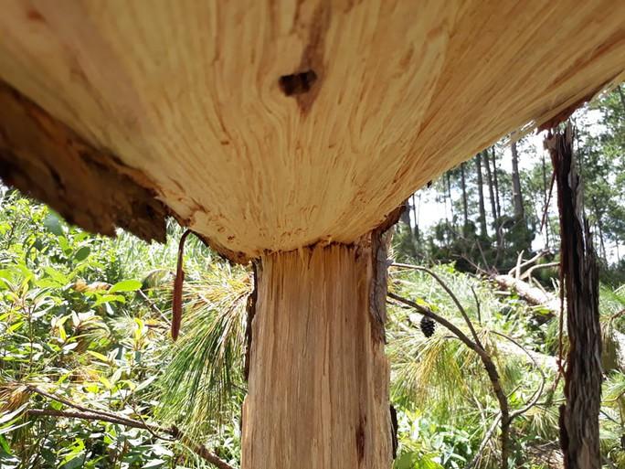 Phó Thủ tướng chỉ đạo điều tra làm rõ vụ phá rừng ở Lâm Đồng - Ảnh 11.