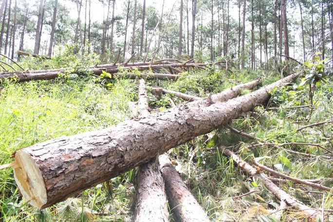 Phó Thủ tướng chỉ đạo điều tra làm rõ vụ phá rừng ở Lâm Đồng - Ảnh 12.