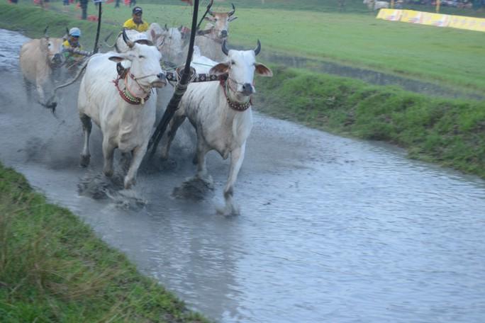 Thót tim với những bước chạy dũng mãnh tại giải đua bò Bảy Núi - Ảnh 2.