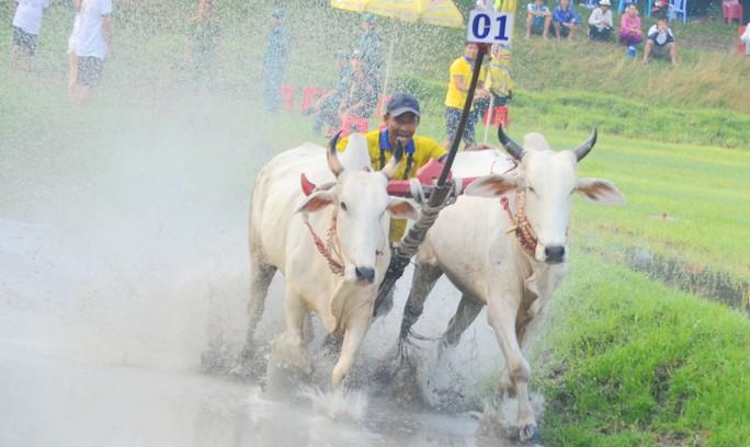 Thót tim với những bước chạy dũng mãnh tại giải đua bò Bảy Núi - Ảnh 12.