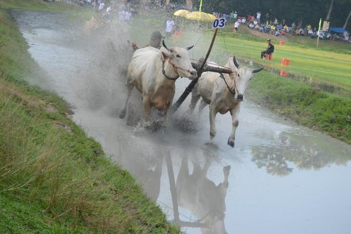 Thót tim với những bước chạy dũng mãnh tại giải đua bò Bảy Núi - Ảnh 3.
