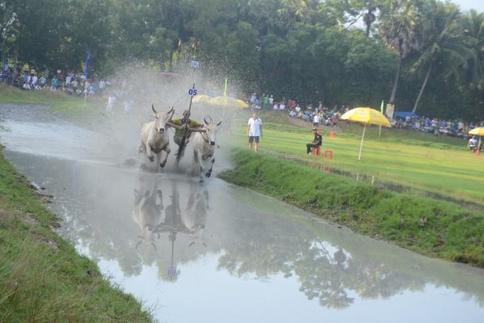 Thót tim với những bước chạy dũng mãnh tại giải đua bò Bảy Núi - Ảnh 4.
