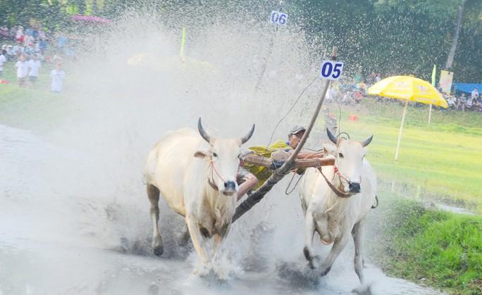 Thót tim với những bước chạy dũng mãnh tại giải đua bò Bảy Núi - Ảnh 11.