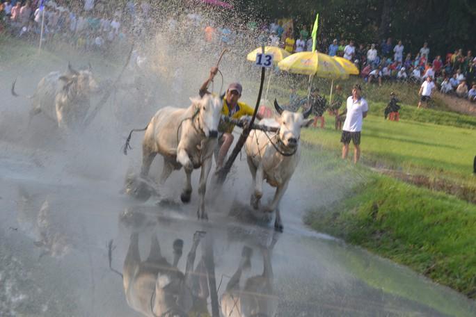 Thót tim với những bước chạy dũng mãnh tại giải đua bò Bảy Núi - Ảnh 5.