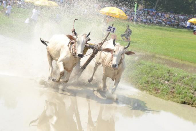 Thót tim với những bước chạy dũng mãnh tại giải đua bò Bảy Núi - Ảnh 7.