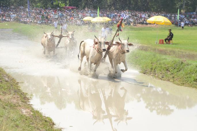 Thót tim với những bước chạy dũng mãnh tại giải đua bò Bảy Núi - Ảnh 8.