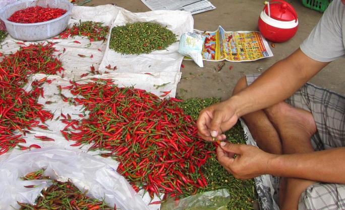 Malaysia bất ngờ dừng nhập khẩu ớt từ Việt Nam - Ảnh 1.