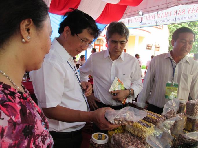 Trồng điều hữu cơ tại Campuchia để xuất khẩu - Ảnh 1.